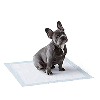 Amazon Basics Dog and Puppy Leak-proof 5-Layer Potty Training Pads with Quick-dry Surface, Regular (22 x 22 Inches) - Pack of 100 by Amazon Basics