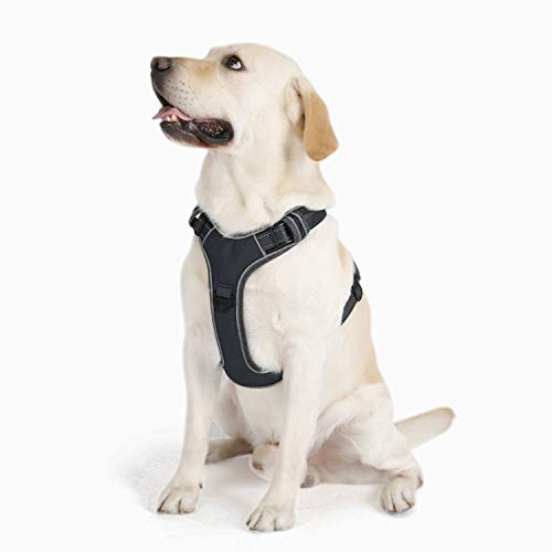 PETTOM Hund Geschirr Weich Brustgeschirr Hunter Hundegeschirr für Kleine Mittelgroße und Große Hunde(Schwarz/Grün/Blau/Rosa/Orange,M)