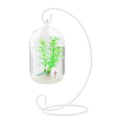 WINOMO 15cm transparent Anhänger ausgesetzt Tank Fische Flasche aus Glas Infusion Vase Aquarium Pflanze Vase für die Dekoration des Hauses (nur mit Schale aus Glas)