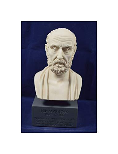 """Hippocrates Busto de reproducción del Museo de la escultura antigua Grecia """"Padre de la medicina moderna"""