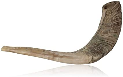 amazon com natural ram horn shofar with curved top and ridges n a musical instruments natural ram horn shofar with curved top and ridges