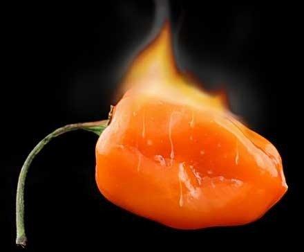 Graines de légumes Habanero orange Piment plantes - 100 pcs GRAINES extrêmement chaude!