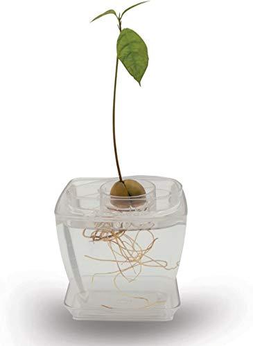 AvoSeedo Grow Your Own Avocado – Gartengeschenke mit Pflanzentopf/Avocadobaum-Kit/Outdoor-Pflanze/Heim-Dekoration/Schrebergärten-Geschenke für Frauen & Männer, ungewöhnlich für sie (transparent1)