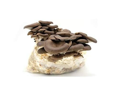 Kit Coltivazione Funghi Panetto Pleurotus Ostreatus 3 Kg...