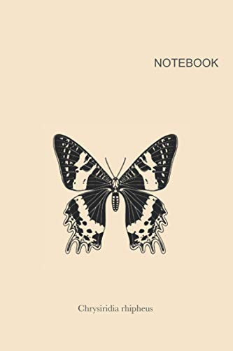 """Butterfly notebook cover #6.: Butterfly journal cover with species name """"Chrysiridia rhipheus"""" 6x9"""" lines with 120 pages"""