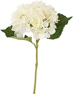 Best hydrangea stem price Reviews
