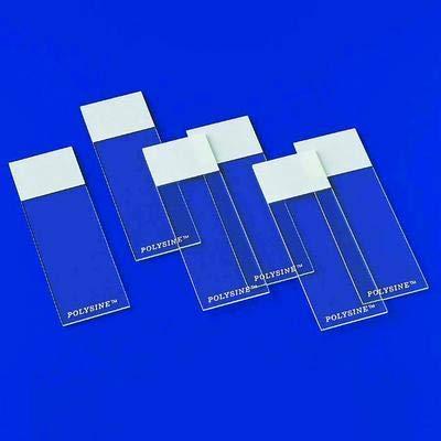 P4981-001 - Polysine Microscope Adhesion Slides, Erie Scientific - Microscope Adhesion Slides - Pack of 72
