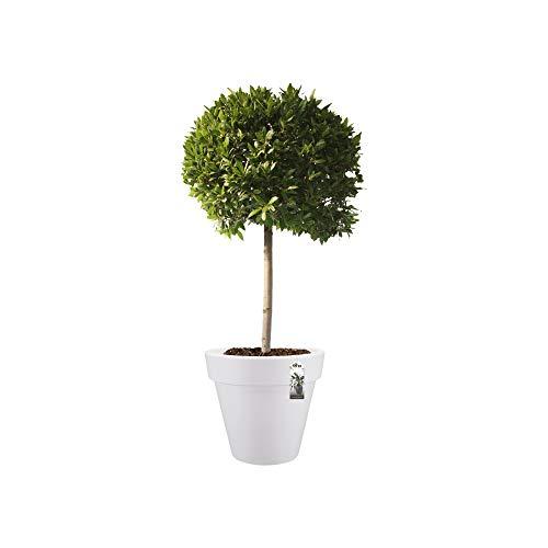 Elho Pure Round 60 - Blumentopf - Weiss - Drinnen & Draußen  - Ø 59.1 x H 53.6 cm