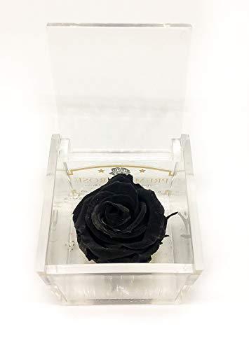 Premium-Rose - Rosa roja estabilizada en cubo transparente -