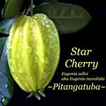 Cutdek ~PITANGATUBA~ Eugenia selloi Star Cherry Fruit Tree Live 3-4+ft Potted Plant