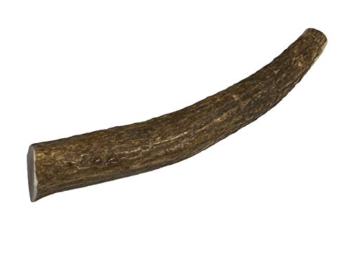 Elkhorn Premium Chews - Medium Whole (for 20-45 lb Dogs and Puppies) Premium Grade Elk Antler Dog Bone - Single Pack (1 Piece) - Long Lasting Chew Toy from Natural Shed Elk Antlers Sourced in The USA