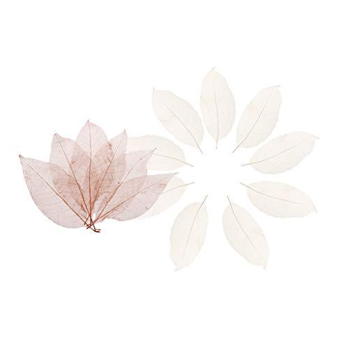 Bonarty Esqueleto de Magnolia Seca Natural Mixta Hojas Artesanía Decoración de Tarjeta de álbum de Recortes de Bricolaje