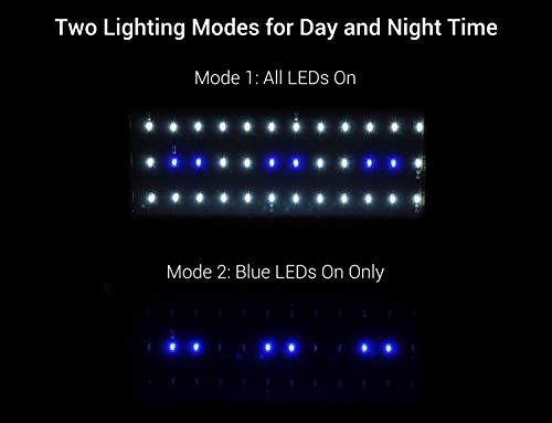 Nicrew Aquarium LED Beleuchtung, LED Aquarien-Aufsetzleuchte Passend für Aquarien 28 bis 50 cm, 6W - 4
