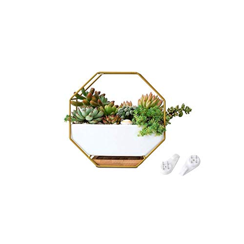 Buy Bargain Faturt Wall-Mounted Flower Pot Home Furnishing Iron Pendant Succulent Potted Plants Crea...