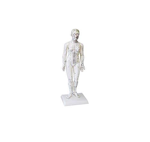 Akupunktur-Modell Frau Höhe ca. 50 cm