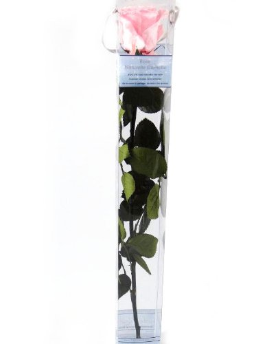 Loisirs créatifs PRZ/3420 Rose Tige, Fleur, 53 x 5 x 5 cm