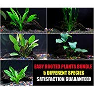 Do Aquarium Plants Need a Heater