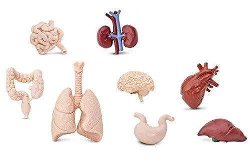 Miniblings 7X Organe des Menschen Set Kunststoff Leben Medizin Anatomie Arzt