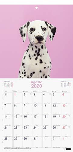 Miquelrius 28061 - Calendario de Pared 300 x 300 mm para escribir Perros & Gatos 2020 Castellano