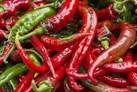 Dichondra Cowhorn Hot Pepper Max 68% OFF Trust Plant Seeds