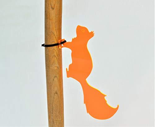 Baumläufer Eichhörnchen – Sonnen...