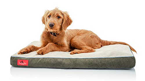 BRINDLE Soft Memory Foam Dog Bed with Removable Washable Cover - 28in x 18in - Khaki