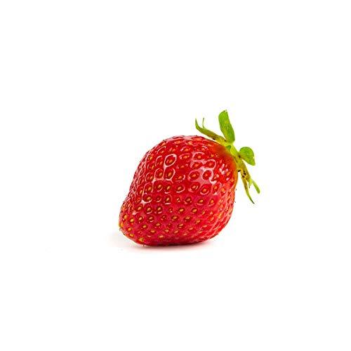 Erdbeerprofi - Erdbeere Korona - 20 Erdbeerpflanzen - Junitragend - Erdbeersetzlinge - Erdbeergrünpflanzen (Pflanzzeit: August - September)