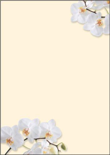 """SIGEL DP904 Motiv-Papier """"White Orchid"""", Briefpapier 90 g, DIN A4, 50 Blatt - weitere Motive"""