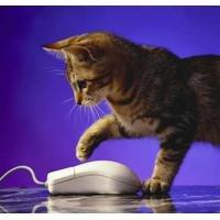 Fellowes muismat kat en muismat meerkleurig