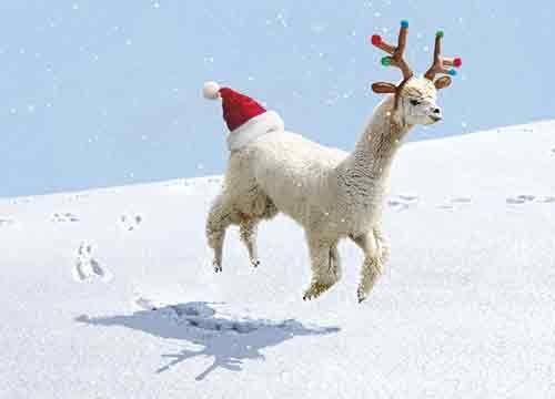 Avanti 10-Count Humorous Christmas Cards with Envelopes, Alpaca Wearing Reindeer Antlers