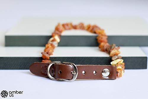 Bernsteinkette für Hunde aus Roh Baltischer Bernstein | Zeckenhalsband | Bernstein Gegen Zecken | Zecken und Flohschutz Halsband (25-30 cm)