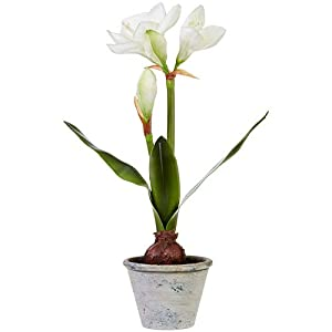 RAZ Imports The Greenery Shop 20.75″ Real Touch Potted Amaryllis – Natural Looking Artificial Flower Plant with Pot – Country Decor and Indoor Garden Accent – Christmas Greenery and Holiday Decoration