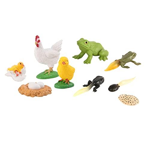 STOBOK 2 juegos de figuras de ciclo de vida de gallo y ranas de ciclo de crecimiento modelo de vida de los juguetes para el aprendizaje de niños y la enseñanza de ayudas