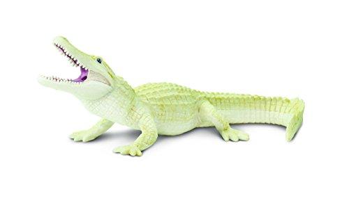 Safari Weiß Alligator
