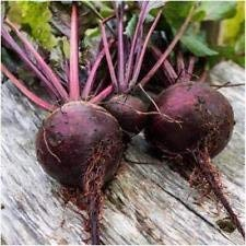 Packung mit 1.000 Samen, Detroit Dark Red Beet Seeds (Beta vulgaris)