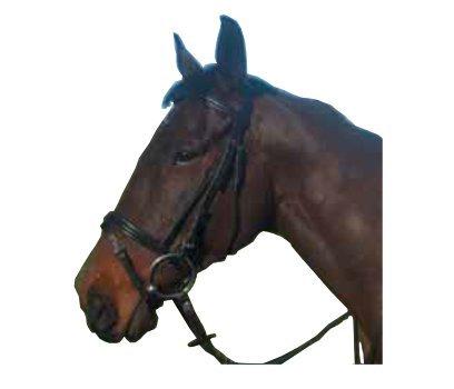 Cameo vadderad flashbrud – tillgänglig i ponny , cob & full – svart eller Havanna – vadderad näsduk, pannband och huvudstycke – utmärkt för användning vid tävlingar eller hem Svart Full
