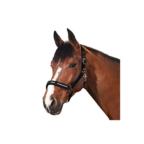 Pikeur Halfter Set Focus Größe: Pony Farbe: 07 black