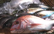 瀬戸内海産の魚をメインに店長お任せ鮮魚セット