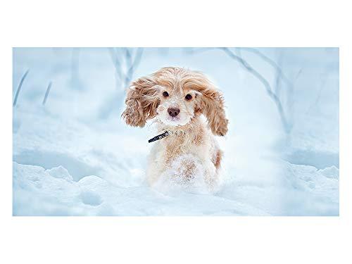 GrazDesign 991117 privacy film hond in sneeuw | glasdecoratiefolie voor decoratieve/zichtbescherming | ondoorzichtige raamfolie 110x57cm