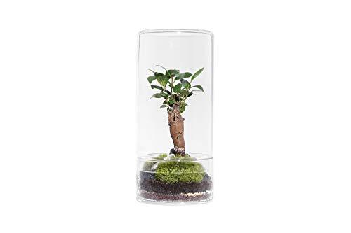 Green Factory – Jungle Tower Medium – Composición vegetal viva y autónoma...