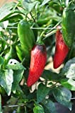 Pimienta picante - Serrano Tampiqueno - Appx 300 semillas - Vegetal