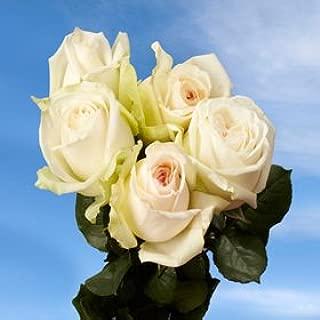 White Wedding Garden Roses | 72 O'Hara Garden Roses White