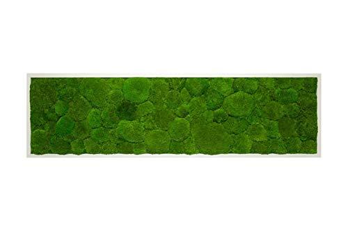 Moosbild Wandbild mit Kugelmoos, Pflanzenbild, versch. Maße günstig (Weiß, 140x40 cm)