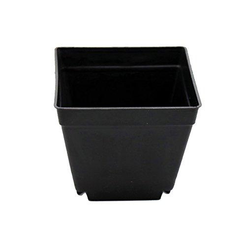 adhere to Fly 10cm carrée plastique Jardin Plante Pot de fleurs Finition brillante pour indoor, Lot de 10 noir