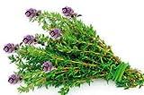 Madre Tierra - Semillas Ecologicas de Tomillo -( Thymus Vulgaris ) Origen Vacarisses - Barcelona - Semillas Especiales - 1.5 gramos