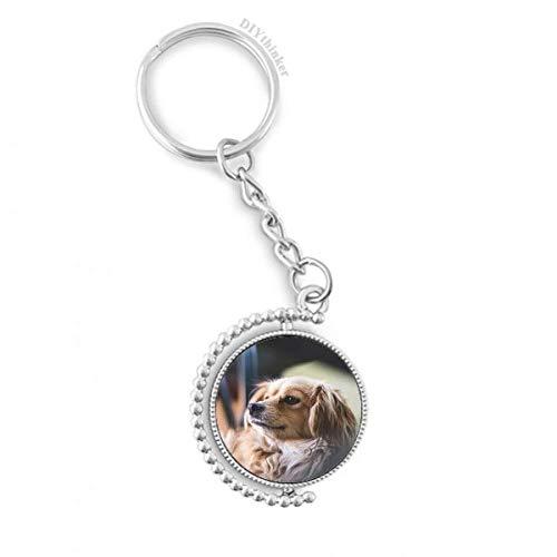 DIYthinker Hund Kleintier Einsames Foto Drehbare Schlüsselanhänger Ringe 1.2 Zoll x 3.5 Zoll Mehrfarbig