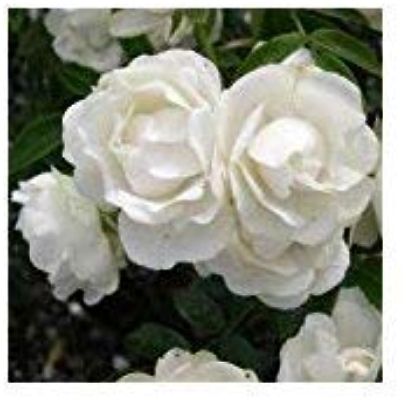 Shop Meeko Rosa Rosa Rosa Paper Anniversary -First   1. Hochzeitstag-Geschenke B07M8XYQRM | Sale Online  | Angemessener Preis  | Verschiedene Arten und Stile  871013