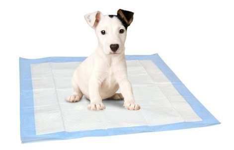 Select Companion Puppy Pee Pads, 23 x 22 Inch, 100 Disposable Piddle Pottypads