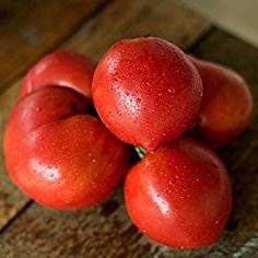 Anna Russian Tomato Seeds - 10+ Rare Non-GMO Organic Heirloom Vegetable Garden Seeds in FROZEN SEED CAPSULES for the Gardener & Rare Seeds Collector - Plant Seeds Now or Save Seeds for Years