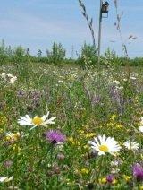 Il vous suffit de graines de fleurs sauvages???abeilles et papillons Fleurs sauvages M?lange???20?G